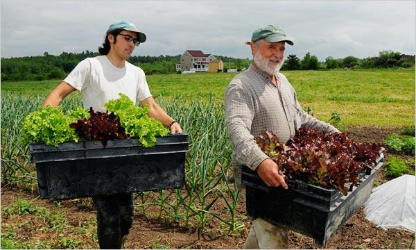 Cum sa iti dezvolti o ferma organica si sa faci o afacere din asta