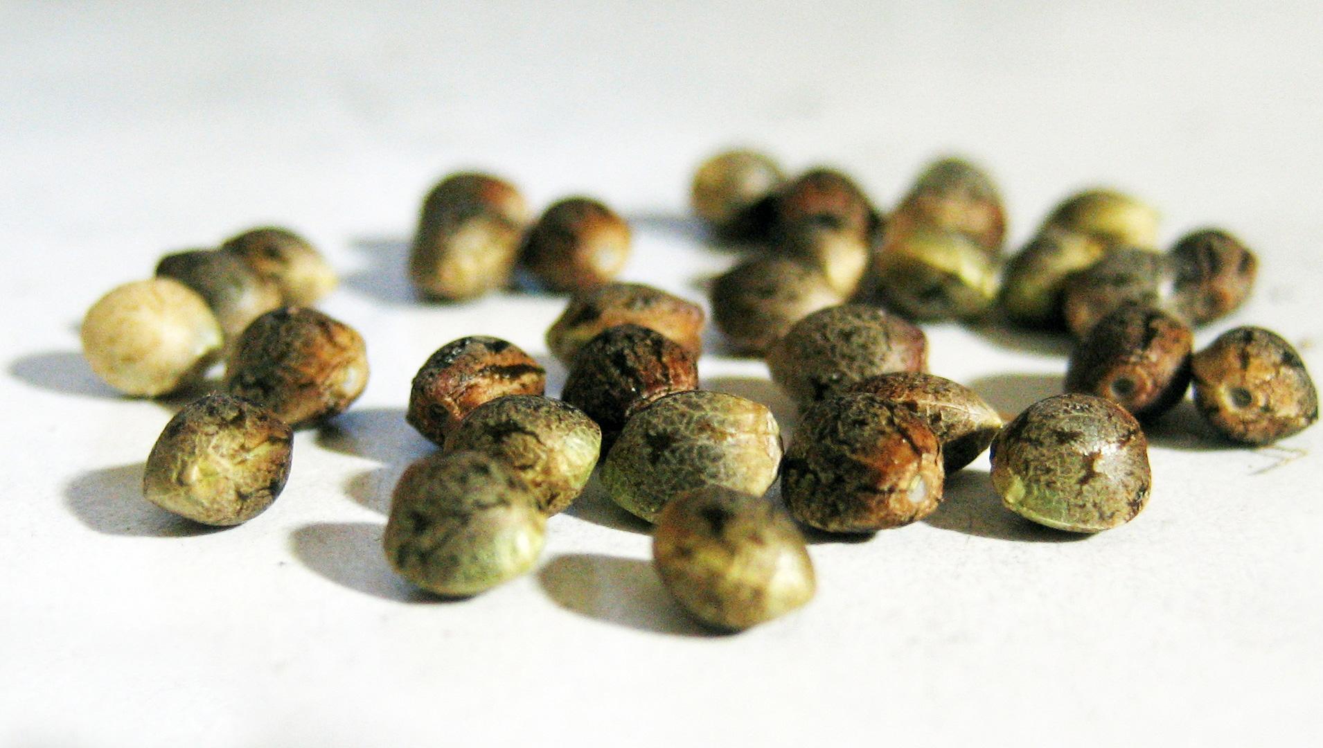 Ce seminte sunt esentiale pentru o buna functionare a organismului?