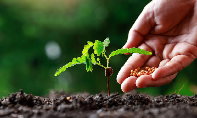 5 afaceri agricole pe care le poți înființa cu investiții minime